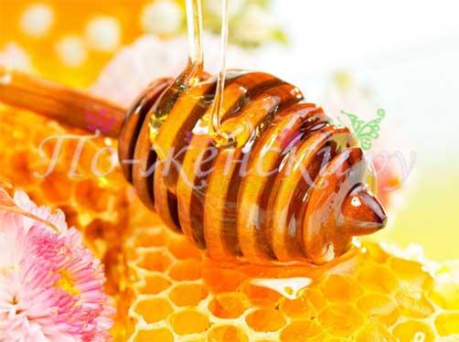 народные средства—лечение медом