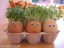 яичная скорлупа для рассады