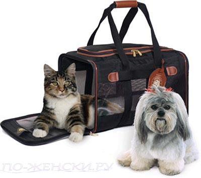 Как перевозить домашних животных