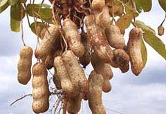 3-народные средства-лечение орехами